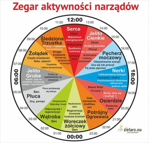 jacek zegar biologiczny 3